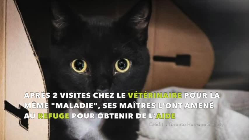 Un chat arrive dans un refuge malade et épuisé - des radios révèlent un objet dans son cou, un sacré choc pour l'équipe vétérinaire
