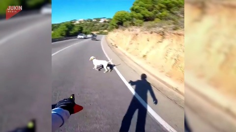 Motorcyclist Helps Escaped Dogs Get out of Busy Road