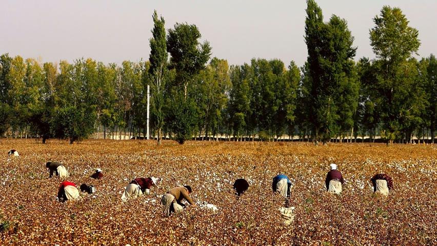 Des députés britanniques cherchent à faire interdire le coton du Xinjiang