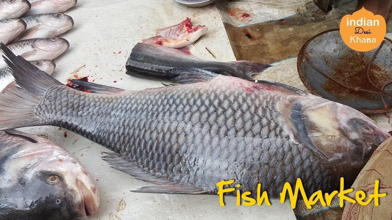 Fresh Fish | Fish Market Madan Mahal Jabalpur | Machli Bazar
