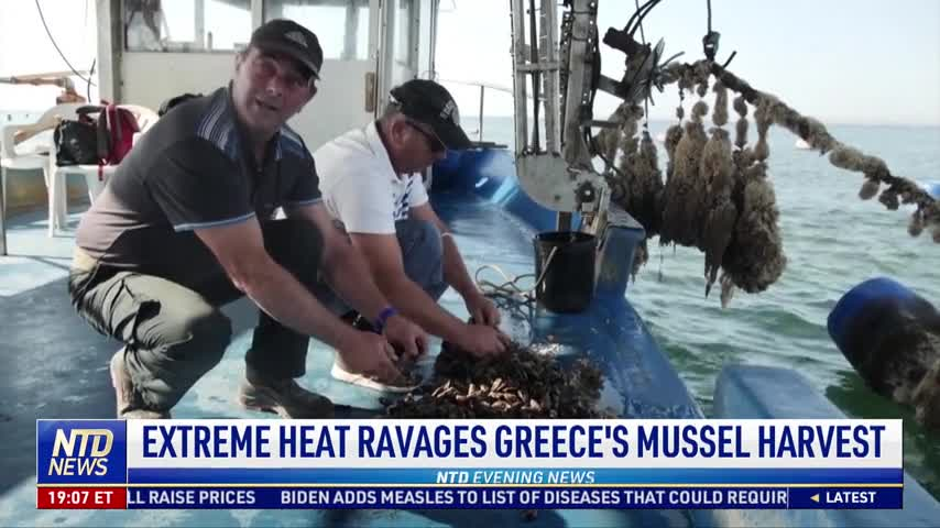 Mussel Farmers Worry About Summer Heat