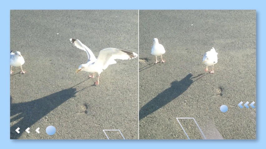 A Welshman Teaches a Seagull to Dance