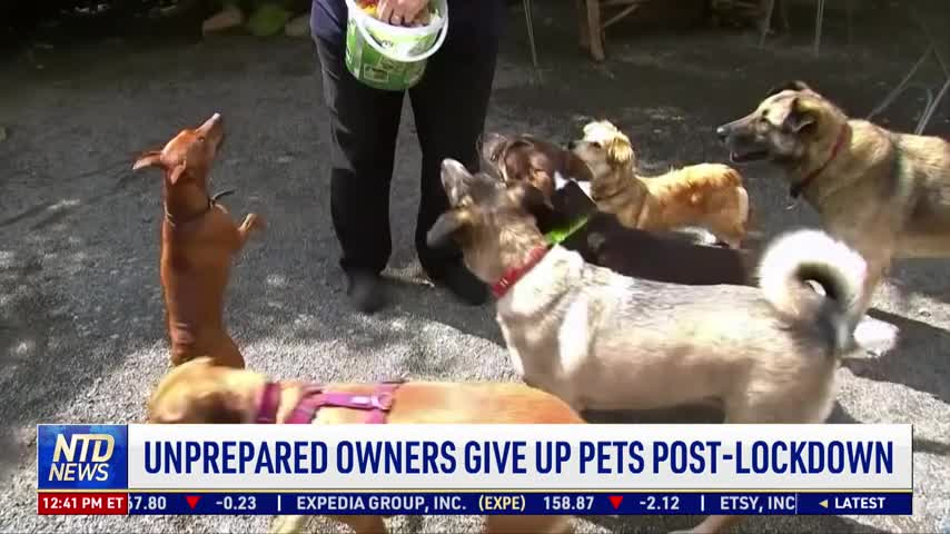 Unprepared Owners Give Up Pets Post-Lockdown